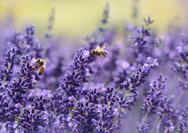 blühpate werden für wildbienen