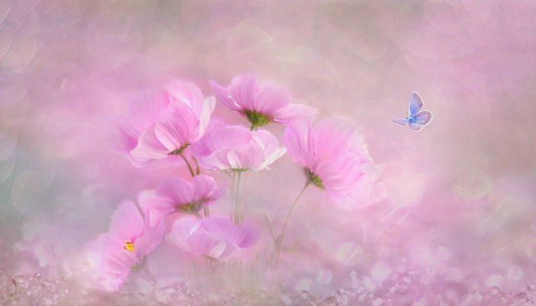 Blühpatenschaften für den Naturschutz