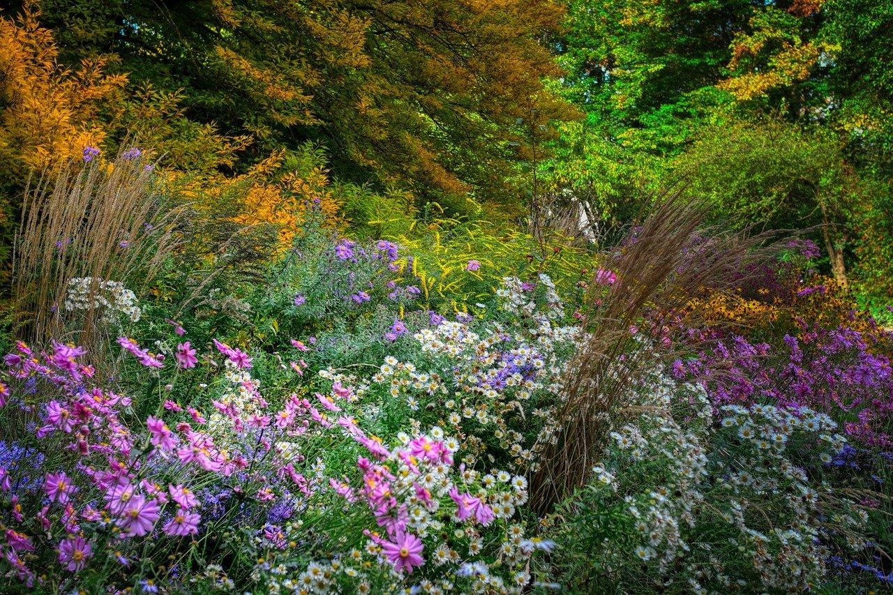 Wildblumenwiese-Garten